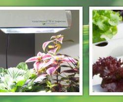 grow-lights-hydroponics-minneapolis